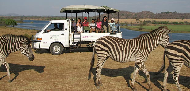 day-safari-game-viewing-drive